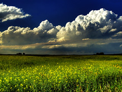 Wonderstruck (Su Inc) Tags: blue sky storm nature field yellow clouds skyscape landscape alberta lightning prairie hdr canola rapeseed aplusphoto superhearts ishflickr photofaceoffwinner photofaceoffplatinum platinumheartaward pfogold fotocompetition fotocompetitionbronze fotocompetitionsilver feb09pfobrackets