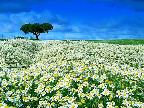 rosas no jardim poema : rosas no jardim poema:Se um dia me trouxeres flores«« – Sonetos
