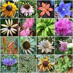 Why we garden....