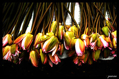 flower bunch (peevee@ds) Tags: flowers market bunch perumal venkatesan venkatesanperumal