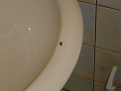 -5 (mivochen) Tags: house bathroom place rent    smallsnail