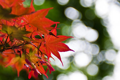 Japanese (nosha) Tags: red sky orange usa green leaves june japanese leaf newjersey spring maple bokeh may nj seed mercer dots mercercounty pennington 2010 lightroom penningtonnj nosha hbw 2870mmf28 bokehdots nikoncorporation nikond300 bokehwednesday may2009 spring2010 1500secatf28