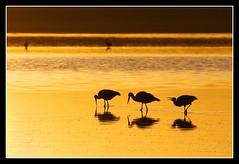 Breakfast (Judith Nicolai) Tags: africa birds sunrise tanzania wildlife lakes silhouettes vogels afrika ooievaars storks 2010 ciconiaciconia whitestorks ndutu ngorongoroconservationarea lakendutu bestofmywinners judithnicolai