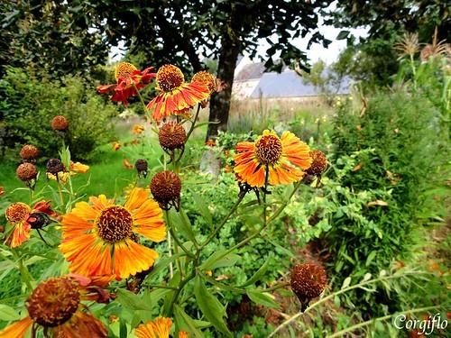 BlogJardin-101022-jardinNormandie-1
