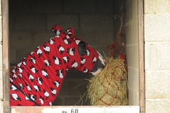 Sheep Pyjamas