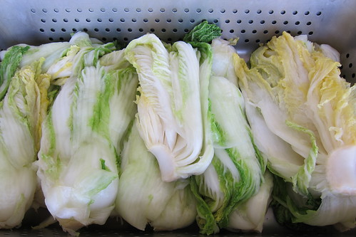 Making Kimchi: salted cabbage after it's been sitting for hours