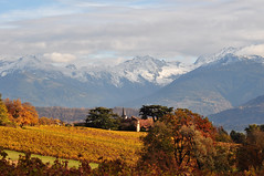 Automnomania (Michele*mp slowly catching up) Tags: autumn mountain france montagne alpes automne landscape countryside europe vineyards savoie paysage campagne vignes frenchalps belledonne rhnealpes lesmarches theunforgettablepictures michelemp fleursetpaysages llitedespaysages