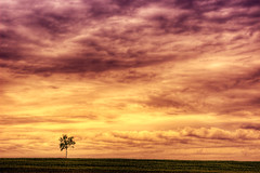 Lonely morning glory (dfworks) Tags: sky clouds pa hdr berkscounty 3xp photomatix canon28135is