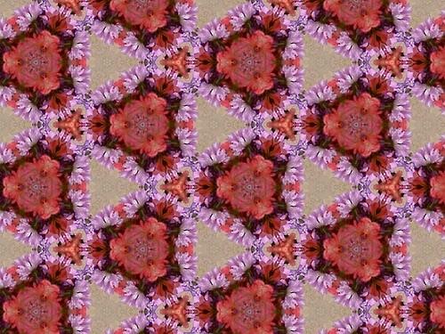 Purple Daisies around Pink Flower Triads 6.2