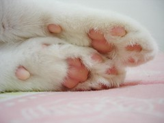 I love these pink paws! (Kitty & Kal-El) Tags: pink cat kitty explore gato gata paws pinkpaws 35faves cc300 platinumphoto aplusphoto diamondclassphotographer superhearts