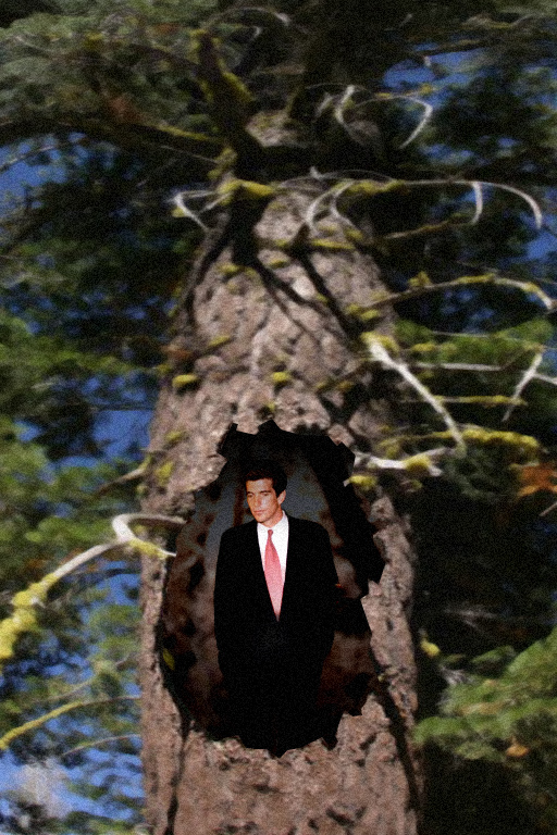 redwood_tree_JFK_Jr