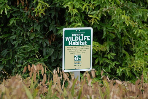 Certified Wildlife Habitat by Amber King Austin