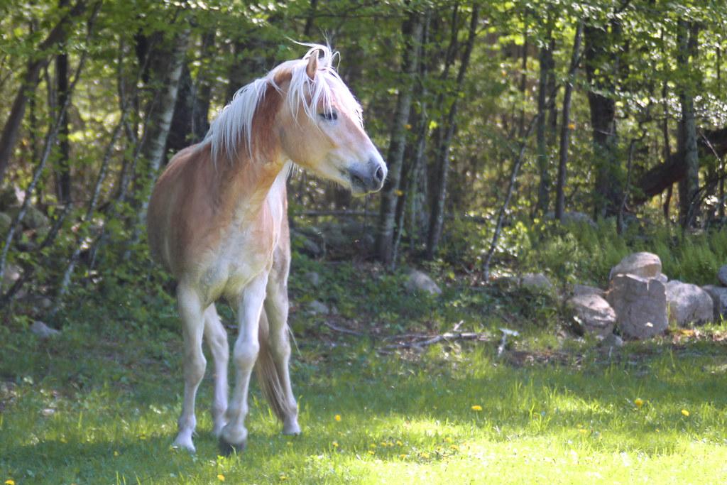 horses 254x