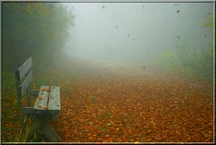 Autumn atmosphere (jd.echenard) Tags: autumn automne smog brouillard banc macolin magglingen feuillesmortes nikond200 cantondebern atmosphereautomnale hohfluesmacolin