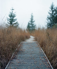 The bog path. (wojszyca) Tags: autumn mamiya grass mediumformat nationalpark kodak bokeh path poland 100 6x7 bog bieszczady rz67 ektar 110mm autaut october2010