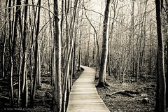 The path lies before me (Mike Wood Photography) Tags: autumn trees light blackandwhite bw sun fall nature forest outdoors eos nopeople arr boardwalk setting tones pathway allrightsreserved lateafternoon mikewood carpetofleaves 450d mikewoodphotographycom fromtheright ©mikewoodphotography mwptrav yourphototips