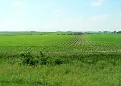 The View (All Directions) (mahalie) Tags: landscape corn iowa farmland heartland fields crops farmlife tractorcade tractorcade2007