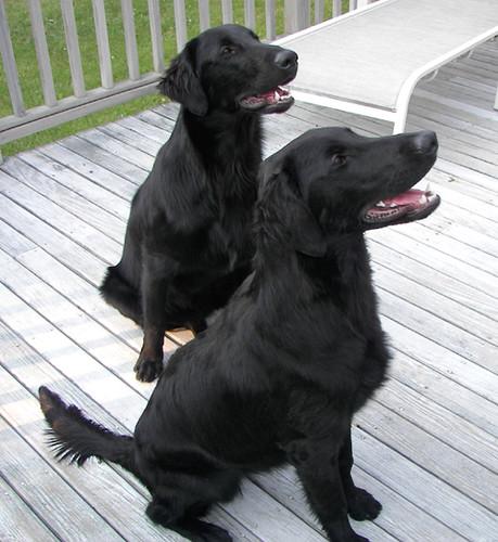 Salem & Mia at 7 months