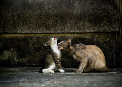 Love (Masakazu Ikeguchi) Tags: love japan cat happy mar nikon bravo d70 explore gato neko fukuoka  straycat  blueribbonwinner noraneko abigfave platinumphoto  masakazuikeguchi  belovedstraycat thecatwhoturnedonandoff