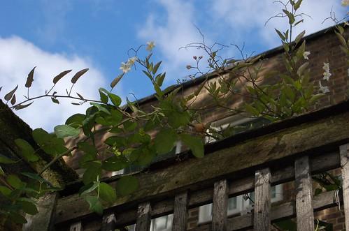 植物とレンガの建物と空