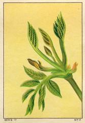 feuilles 11