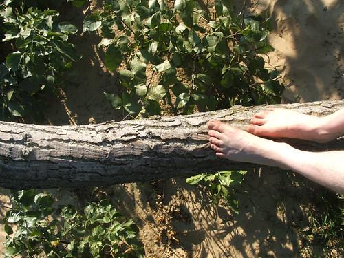 Feet branch
