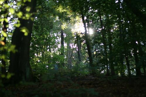 Gegenlicht im Wald