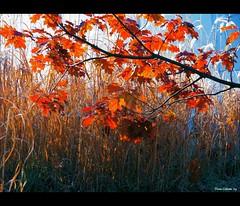 Ciel... c'est l'automne...!!!