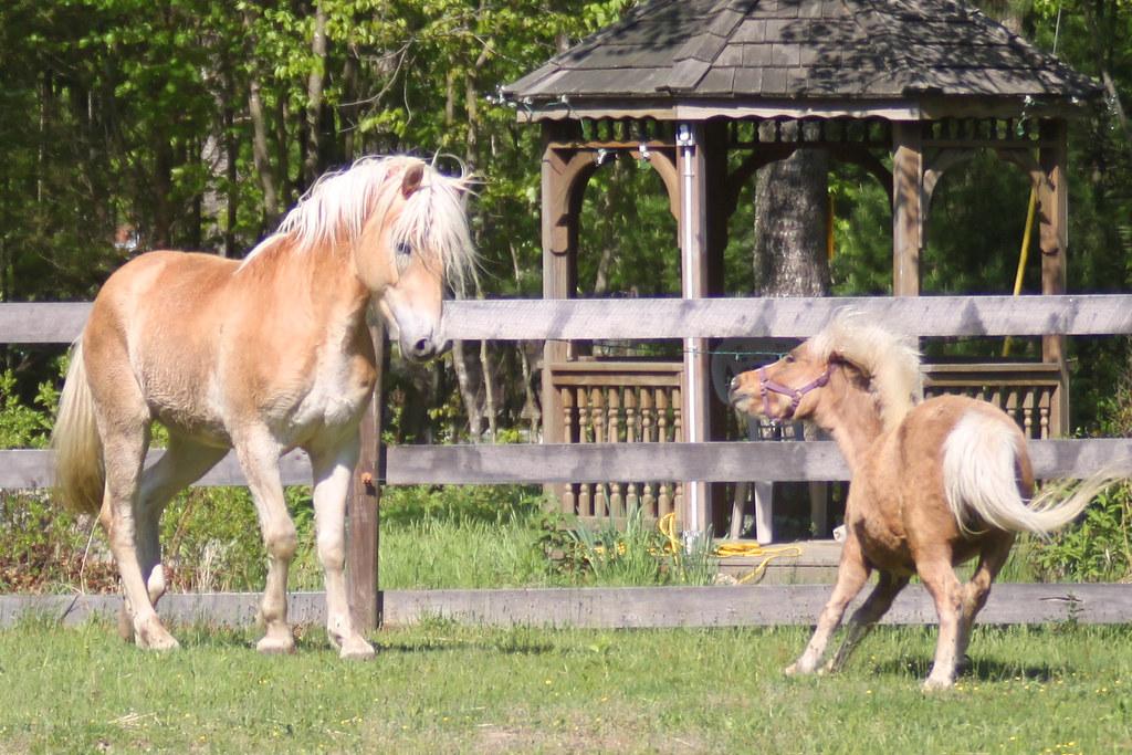 horses 216x