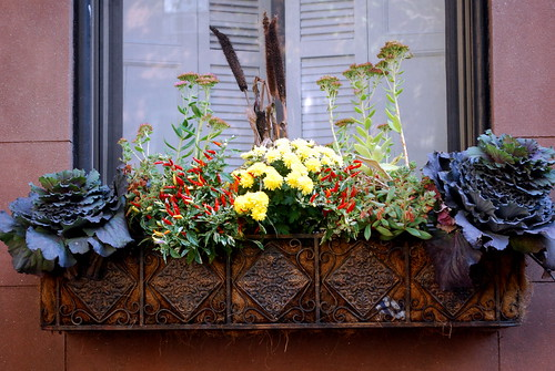 Decorated Windowbox