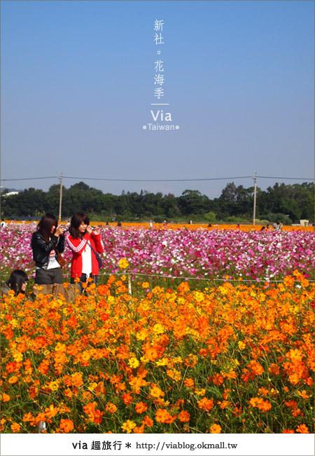 【2010新社花海】via帶大家欣賞全台最美的花海!15