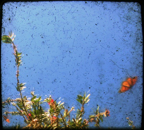 Monarch Grove Sanctuary, Pacific Grove, CA