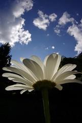 Skyflower (PBY) Tags: flower fisheye blacklight 1017mm