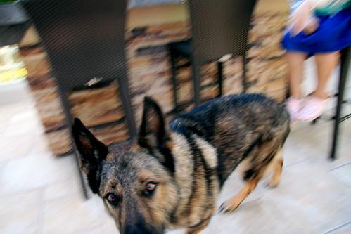 Hunter :: blur