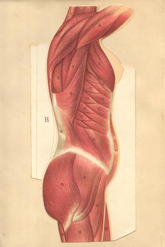 anatomiefemmprofil1