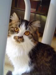 Nanny (Mel1st) Tags: cat kat chat nanny gata neko katze macska kot kats kedi koshka katt kato kissa kon meo ronronovisky paka kocka fato macka feles pussi negru chatul popoki qit kutjing miston maaoh mist