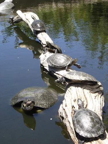 Turtle Party