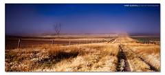 The Warwick Incident. ([ Kane ]) Tags: morning flowers light sky mist cold colour tree grass fog canon dawn glow farm driveway qld kane warwick gledhill sigma1020 50d 16x7 kanegledhill wwwhumanhabitscomau kanegledhillphotography