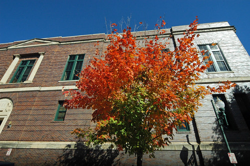 On the streets of Ashvegas: Red tree, brown building