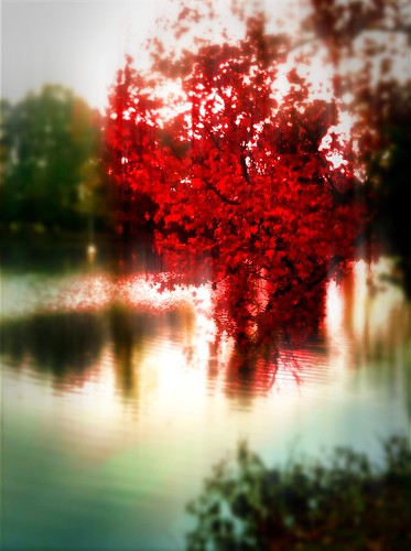 { iPhoneography } Prettiest Tree on the Pond