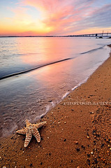 Relaxing @ the Beach [Explore #5] (Gary Ngo | Photography) Tags: sky seascape reflection beach clouds landscape nikon colorful starfish maryland explore sandypointstatepark photographyblog d7000 sonyphotochallenge