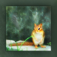 hi, it's me, Alvin... ('pixler') Tags: pictures camera toronto ontario canada cute art simon film animal digital photoshop computer photography graphics october flickr image posing manipulation announcement chipmunk flickrverse create creator fx manager favourite flickrdom flickrfun greeting alvin edit theodore 2010 anthropomorphic flickrites thebigsmoke alvinandthechipmunks flickrland davidseville artography mywinners photographicarts flickrween platinumphoto flickrfriendship flickrship flickrhood flickrmas chippettes flickrtine artographx pixler bighugz 20ten blinkagain