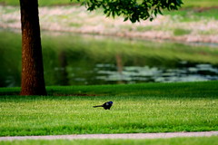 (Sij Pol) Tags: lake tree bird naturesfinest krishlikesit