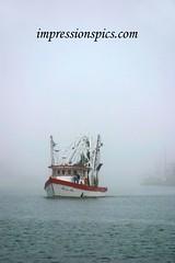Roxanne Marie in Fog