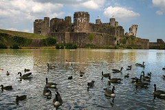 Geese on Castle Moat (Time Grabber) Tags: canada tower wales geese caerphillycastle moat wfc ih superbmasterpiece diamondclassphotographer theunforgettablepicture timegrabber imagesofharmony wfgcastlestimegrabber