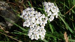 (Ronn Bjrkquist) Tags: flowers white green grass yellow rock stone lights airport sharp poles essa distance arlanda arn flowa