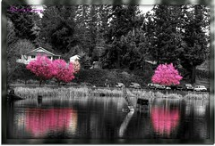 Spring at the pond (Garry's lens....) Tags: pink trees lake reflection water colors beautiful spring pond pretty flickraward