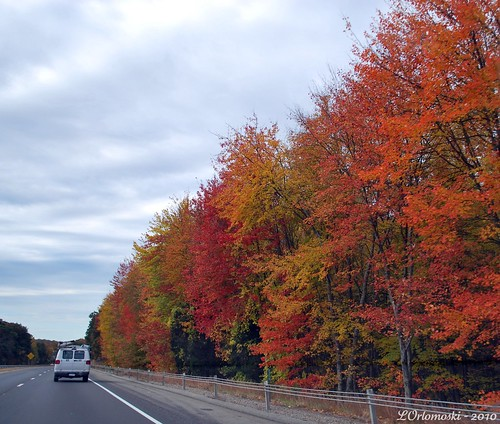 Turnpike Foliage