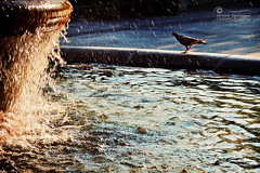 Singing in the Rain... (SonOfJordan) Tags: color bird water fountain rain canon eos athens greece splash xsi 450d sonofjordan shadisamawi wwwshadisamawicom