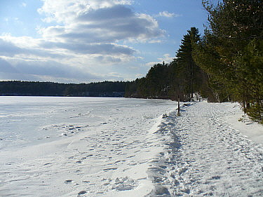 Frozen shore, Walden Pond